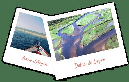 delta de la leyre et banc d'arguin